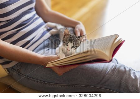 Soft cuddly kitten lying in its owner's lap enjoying and purring while the owner is reading a book in a warm, cozy, domestic atmosphere poster