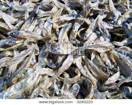 Thousands Of Fish
