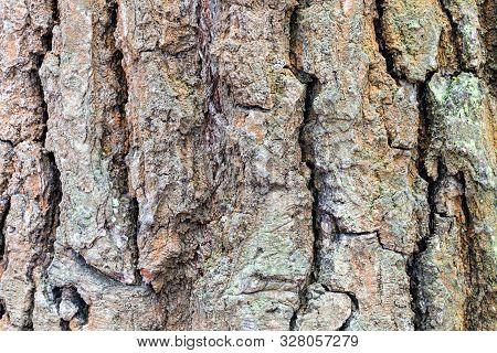Natural Texture - Wrinkly Bark On Mature Trunk Of Oak Tree (quercus Robur) Close Up