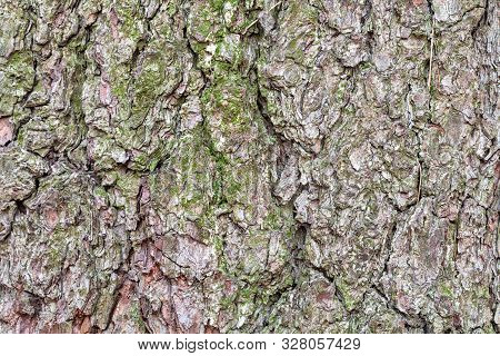 Natural Texture - Wrinkly Bark On Old Trunk Of Pine Tree Close Up