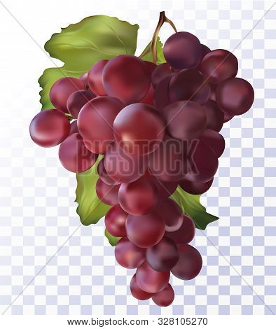 Fresh Red Grapes On Transparent Background. 3d Realistic Grapes.wine Red Grapes. Food Concept. Vecto