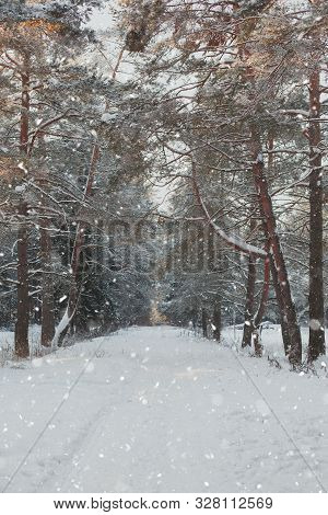 Landscape Of Wild Winter Forest In Snowfall