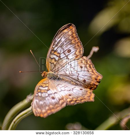 Beautiful Orange And Brown Butterfly On A Plant Stem