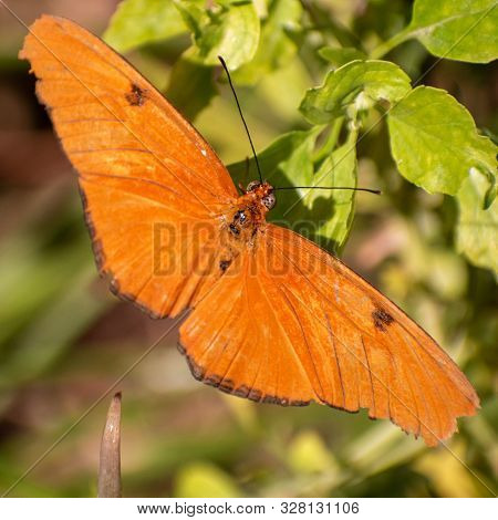 Close Up Of A Bright Orange Butterfly On Green Leaves