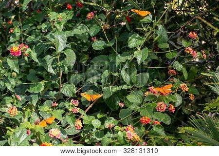 Green Bush With Small Flowers And Orange Butterflies