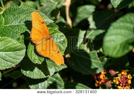 Close Up Of An Orange Butterfly Sitting On Green Leaves
