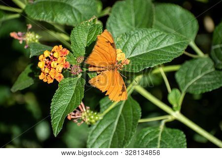 Orange Butterfly On Green Leaves With Small Flowers