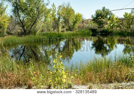 Peaceful Oasis In The Desert With Water And Green Trees