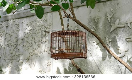 Wide View Of A Caged Pet Bird For Sale At Mongkok Market In Hong Kong