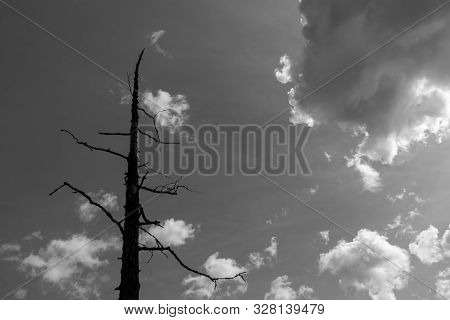 A Lonely Old Tree In The Cloudy Sky. Black And White Image.