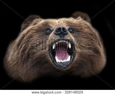 A Stuffed Kamchatka Brown Bear Head Isolated On Black Background