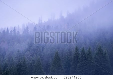 Landscape With Fog Covering Mountain Forest. Hiking In Nature On The Top Of The Mountain. Hiking In