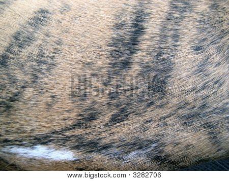 Tiger Striped Hair
