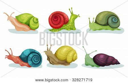 Lovely Snails Crawling In Different Directions Vector Illustrations