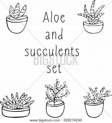 Black And White Set Of Succulents And Scarlet, Hand Drawing, Illustration On White Background, Sketc