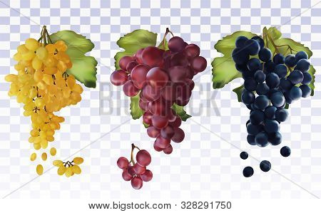 Wine Grapes. Collection With Three Grapes Red, Dark Blue, White. Table Grapes. Icon Set Grapes. 3d R