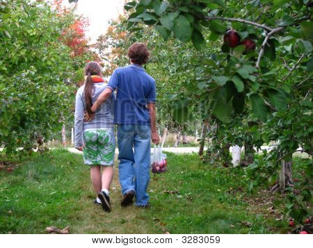 Lovers Picking Apples