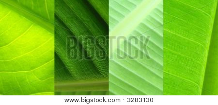 Collage Leaf Green Nature