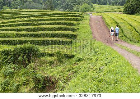 Sao Miguel Island, Azores - June 26, 2019: People Hiking In The Scenic Gorreana Tea Plantation