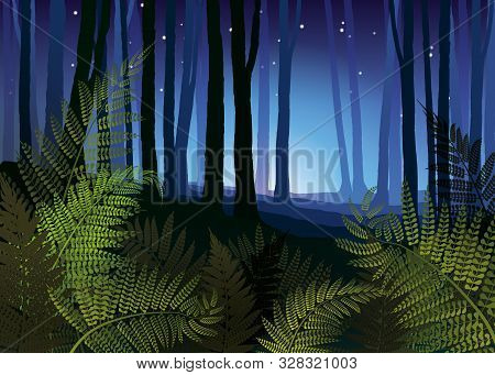Foggy Forest With Forest Fern Vector Illustration. Tree Trunks In Blue Mist. Fog In Night Forest Vec
