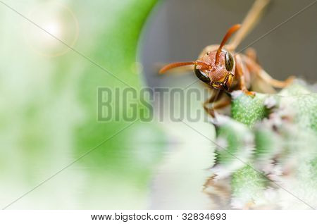 Wasp And Cactus  Macro In Green Nature Or In Garden