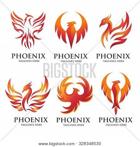 Luxury Phoenix Logo Concept, Best Phoenix Bird Logo Design, Phoenix Vector Logo, Creative Logo Of My