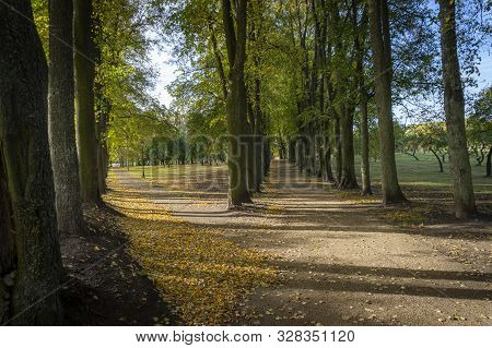 Forking Road In A Park Lined With Colorful Autumn Trees In A Receding View Conceptual Of The Seasons