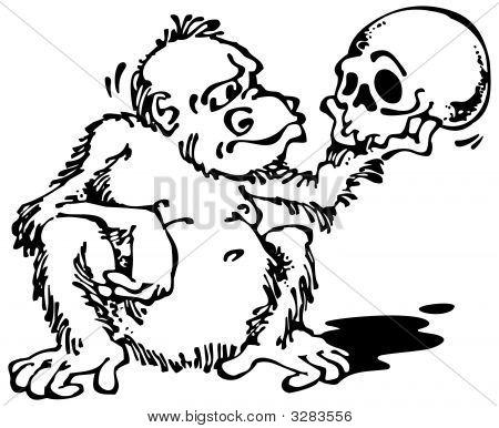 Monkey And Skull