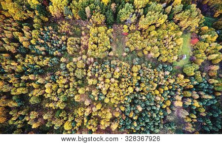 Colorful Autumn Forest Nature Background