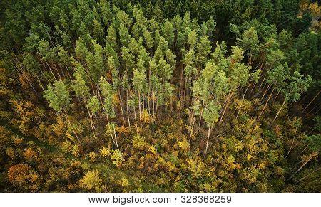 Green Forest Aerial Landscape