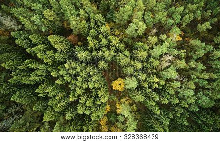 Land Of Green Autumn Forest