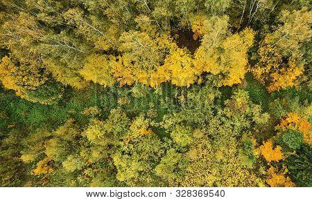 Green Path Around Yellow Trees
