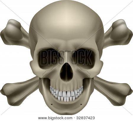 Realistic skull and bones