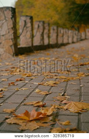 Yellow Autumn Maple Leaves On A Park Walkway In Autumn Close Up