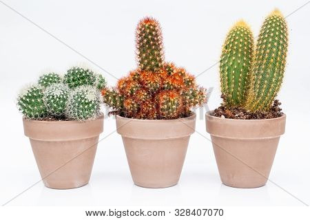 Various Cactus House Plants In Stone Pots On White Background