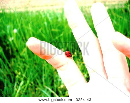 A person with a ladybug crawling on their finger. poster