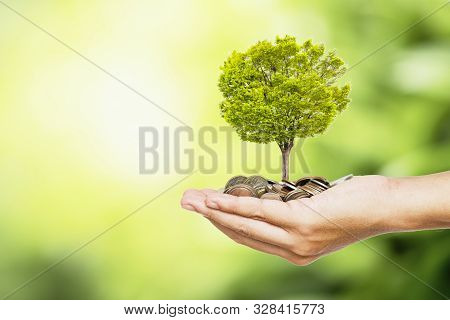 Man Hand Holding Coins And Tree Look Like As Planting On  Greenery Background And Sunlight For Plant