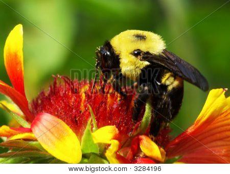Wildflower Visitor