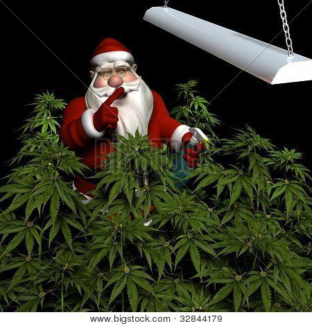 Santa watering his crop of medicinal marijuana under a grow light. Isolated. Bah Humbug poster