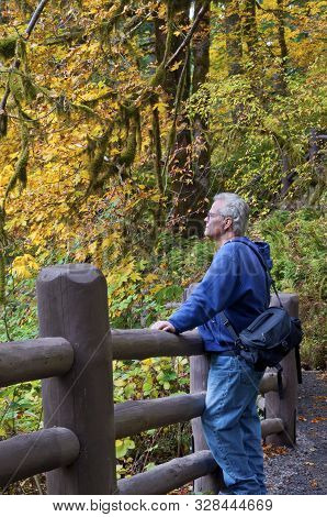 Senior Man Viewing Fall Autumn Leaves In Park After Hiking Along Trail.