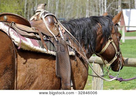 Beautiful Horse Saddle