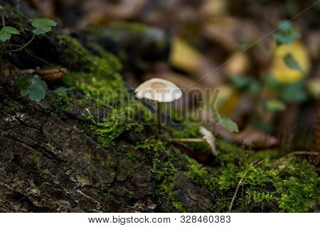 Mushroom Growing On A Tree Covered With Green Moss