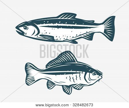 Fishs Such As Trout And Carp. Fishing Concept. Vector Illustration