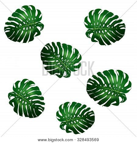 Seamless Pattern Of Beautiful Big Green Leaves Monstera Plant, Monstera On White Background, Vector