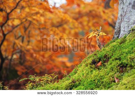 Beautiful Forest Background In Golden Foliage. Lovely Autumnal Nature Scenery