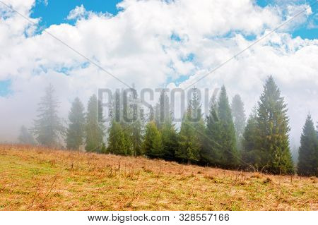 Fir Trees On The Grassy Hillside On Foggy Morning. Breathtaking Autumn Scenery With Clouds On The Sk