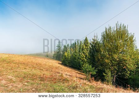 Fir Trees On The Grassy Hillside On Foggy Morning. Wonderful Autumn Scenery. Mysterious Nature Backg