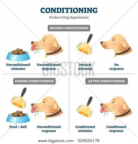 Conditioning Vector Illustration. Labeled Pavlovian Respondent Learn Scheme. Dog Experiment With Foo