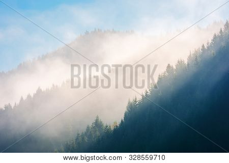 Thick Glowing Fog Among Spruce Forest Down In The Valley. Wonderful Nature Background. Aerial Viewpo