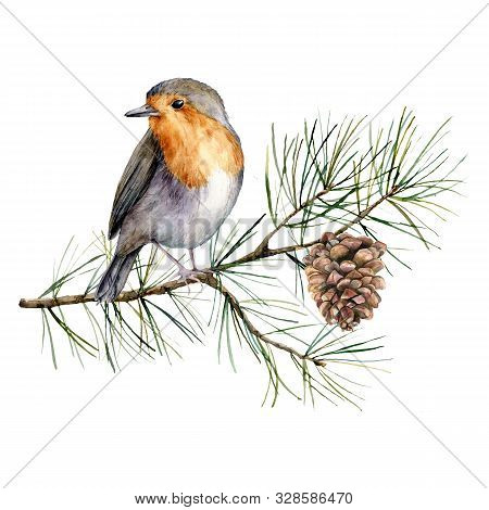 Watercolor Christmas Composition With Robin. Hand Painted Winter Card With Bird, Fir Branch And Cone